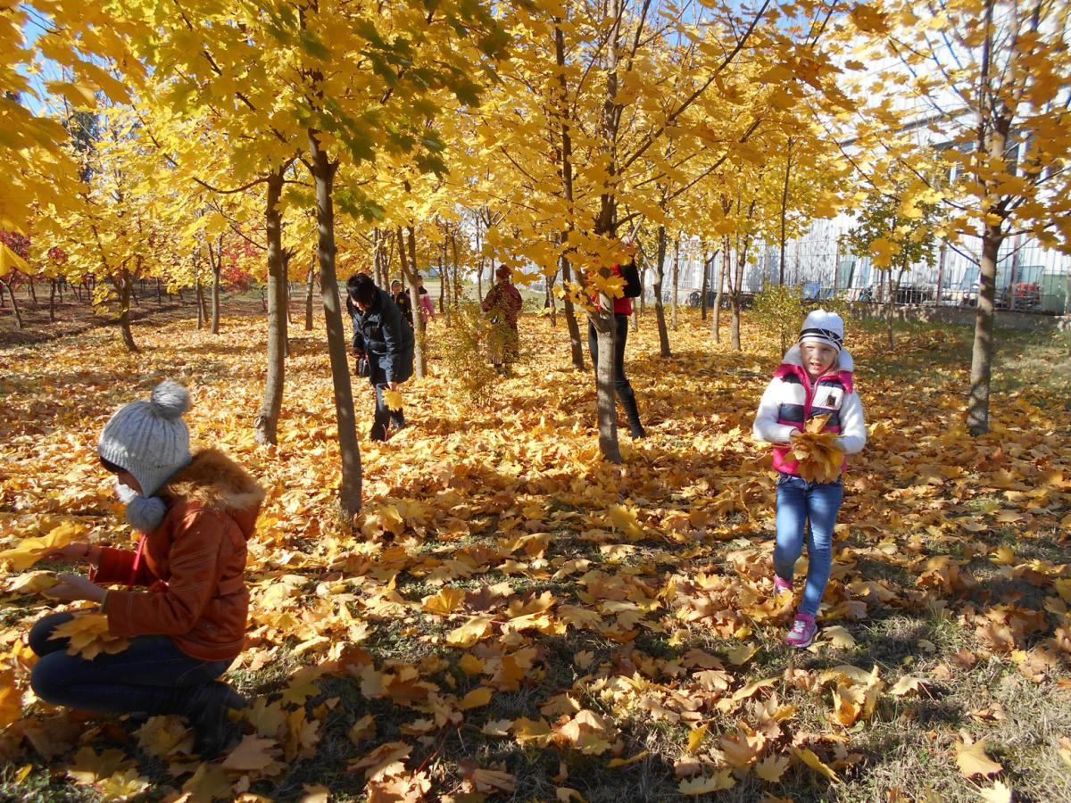 Картинки дети гуляют в осеннем лесу