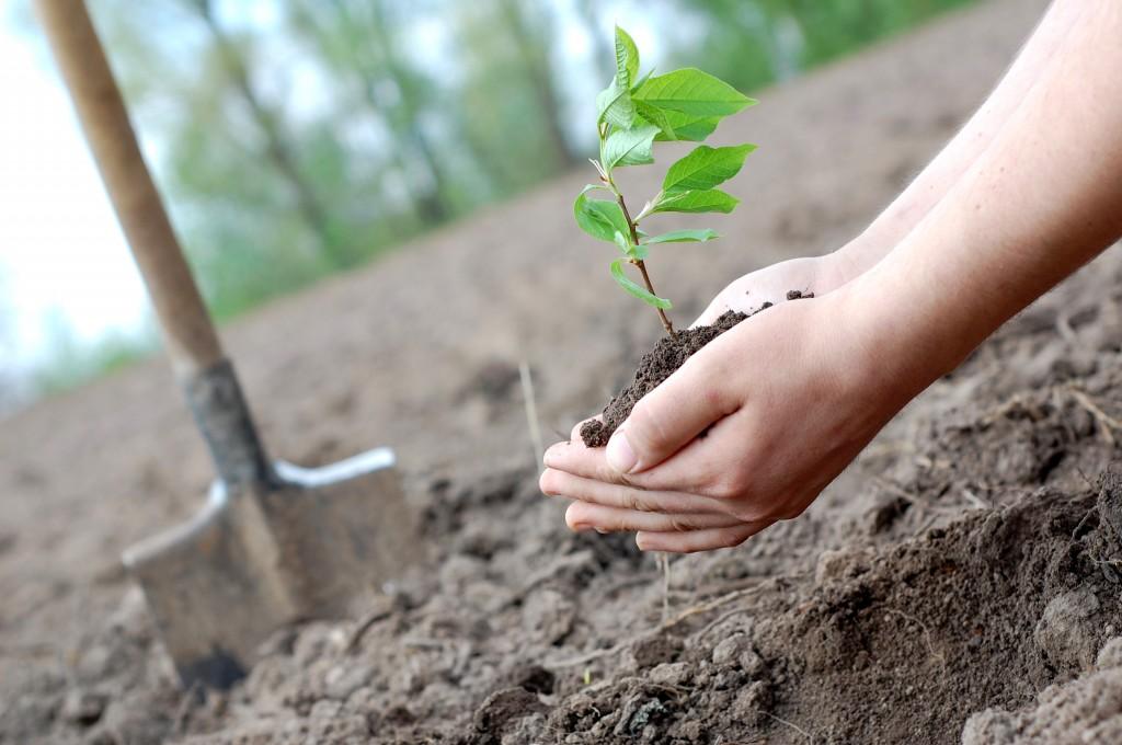 Если сниться сажать деревья
